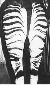 Pasport picture of okapi Moera
